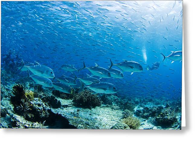 Recently Sold -  - Underwater Photos Greeting Cards - Typical Ocean Scene Greeting Card by Dave Fleetham - Printscapes