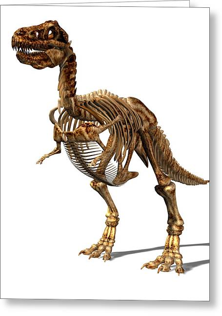T-rex Greeting Cards - Tyrannosaurus Rex Dinosaur Greeting Card by Friedrich Saurer