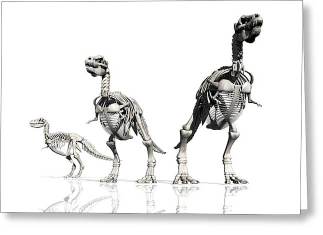 T-rex Greeting Cards - Tyrannosaurus Rex Skeletons, Artwork Greeting Card by Victor Habbick Visions