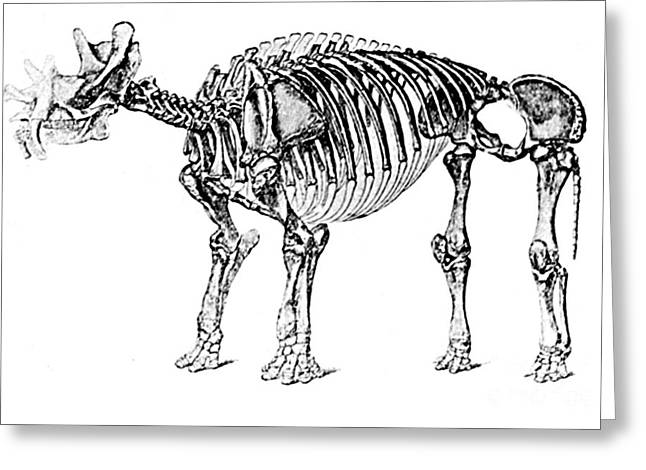 Pre-restoration Greeting Cards - Uintatherium,  Aka Dinoceras, Cenozoic Greeting Card by Science Source