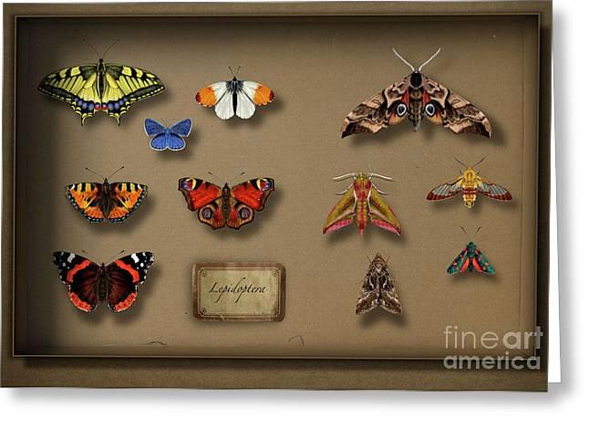 Antenna Drawings Greeting Cards - UK Butterflies UK Moths - British Butterflies British Moths - European Butterflies  European Moths Greeting Card by Urft Valley Art