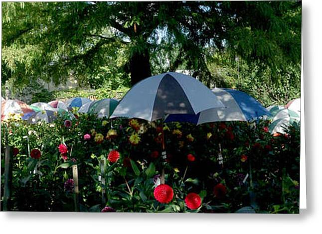 Umbrella Pastels Greeting Cards - Umbrella Garden Greeting Card by Bernadette Kazmarski