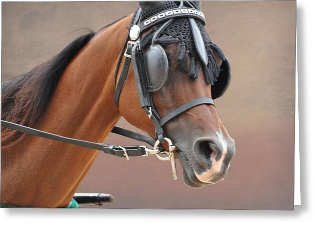 Harness Racing Greeting Cards - Under Harness Greeting Card by Jan Amiss Photography