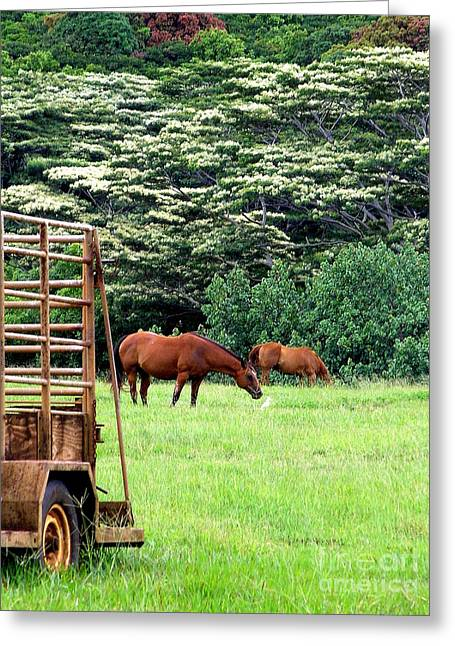 Horse And Cart Greeting Cards - Under the Albesias Greeting Card by Mary Deal