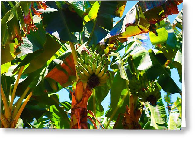 Banana Tree Greeting Cards - Under The Banana Trees Greeting Card by Cheryl Young