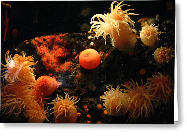 Sea Anenome Greeting Cards - Under the Sea Greeting Card by Cat Reynolds
