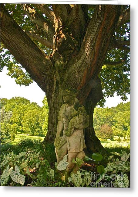 Calladiums Greeting Cards - Under The Sunny Linden Tree Greeting Card by Byron Varvarigos