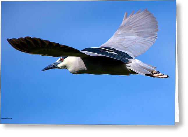 D700 Greeting Cards - Under The Wing View Greeting Card by Stephen  Johnson