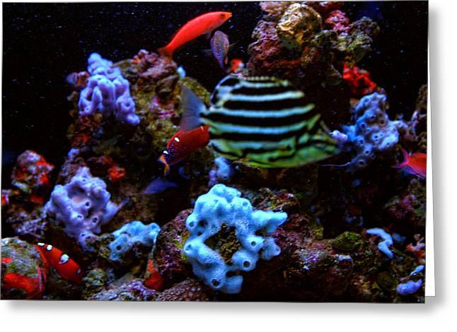 Reef Fish Greeting Cards - Under Water Scene Greeting Card by Linda Phelps