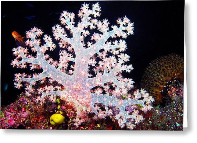 Alga Greeting Cards - Underwater Apple Greeting Card by Jean Noren