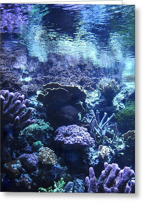 Under-water Greeting Cards - Underwater Greeting Card by Dan Holm