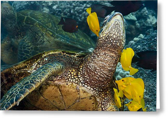 Bathe Greeting Cards - Underwater Friends Greeting Card by Dave Fleetham