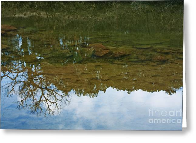 Trees Reflecting In Water Greeting Cards - Underwater Landscape Greeting Card by Lisa Holmgreen