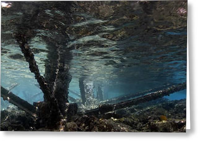 Ocean Panorama Digital Art Greeting Cards - Underwater Panorama Greeting Card by Rico Besserdich