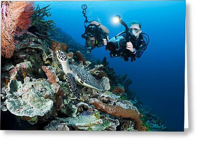Undersea Photography Greeting Cards - Underwater Photography Greeting Card by Dave Fleetham - Printscapes