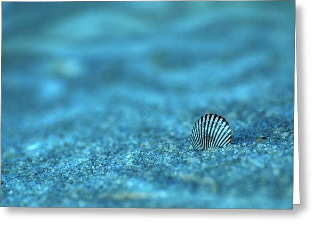 Underwater Seashell - Jersey Shore Greeting Card by Angie Tirado