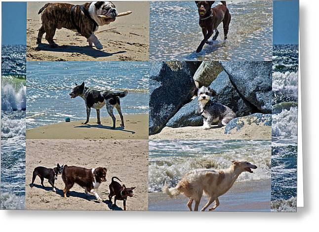 Dog Play Beach Greeting Cards - Uninhibited Creatures Greeting Card by Gwyn Newcombe