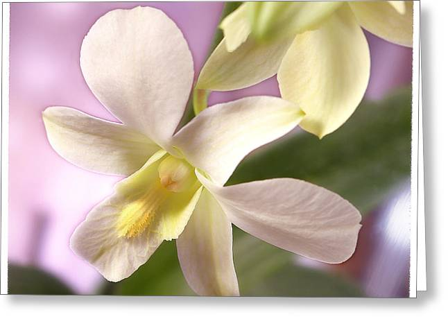 White Orchid Greeting Cards - Unique White Orchid Greeting Card by Mike McGlothlen