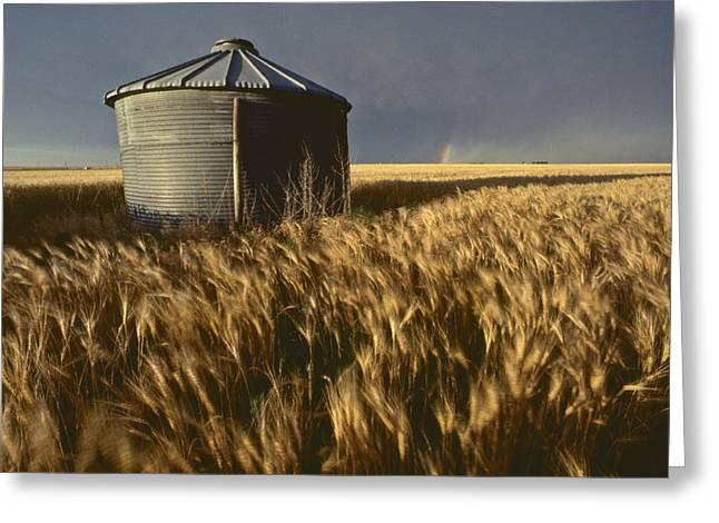 Shed Photographs Greeting Cards - United States, Kansas Wheat Field Greeting Card by Keenpress