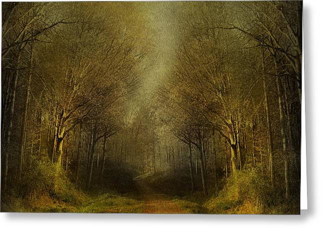 Unknown Footpath Greeting Card by Svetlana Sewell