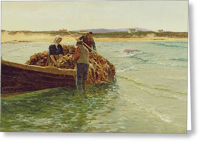 Kelp Greeting Cards - Unloading Kelp Weed  Greeting Card by Charles William Bartlett