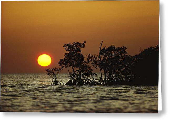 Mangrove Trees Greeting Cards - Untitled Greeting Card by James P. Blair