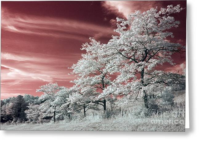Sunset Greeting Cards Greeting Cards - Untitled  Greeting Card by Jeremy Holmes