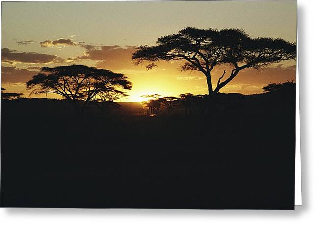 Reserve Greeting Cards - Untitled Greeting Card by Kenneth Love