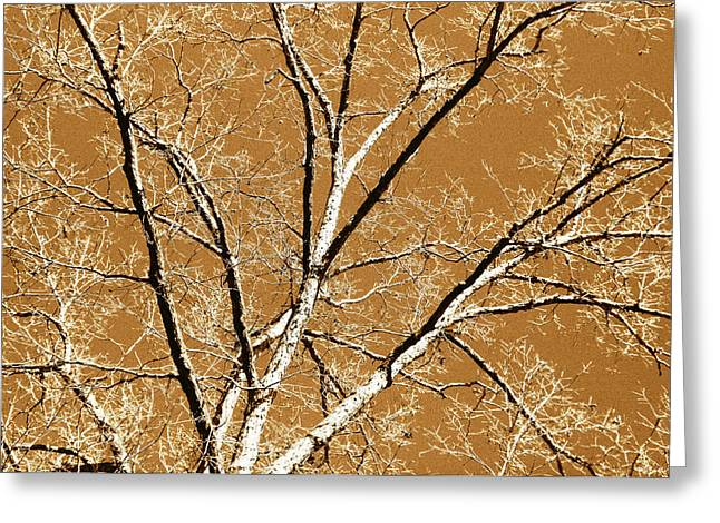 Duo Tone Greeting Cards - Untitled Tree Greeting Card by Carrie Kouri
