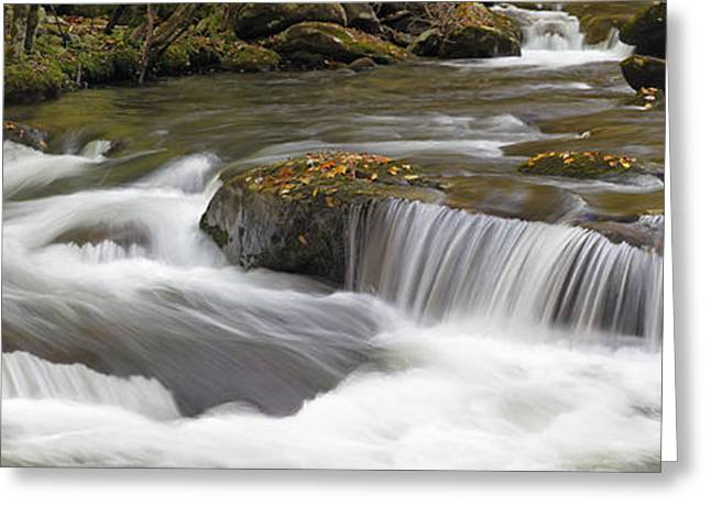 Rush-bed Greeting Cards - Unyielding Greeting Card by Gary L Suddath