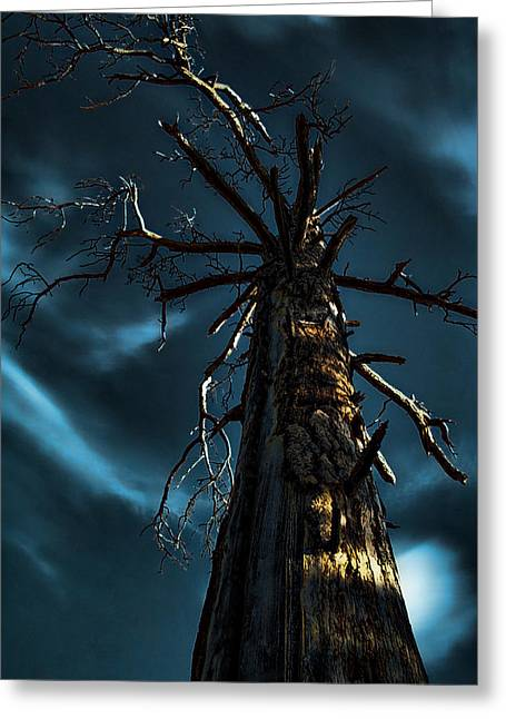 Gnarly Greeting Cards - Up a Tree Greeting Card by Bonnie Bruno