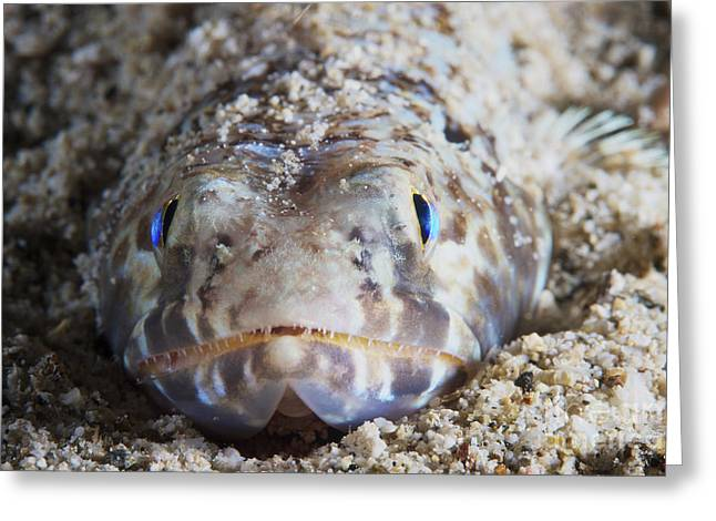 Undersea Photography Greeting Cards - Up Close And Personal With A Lizardfish Greeting Card by Terry Moore