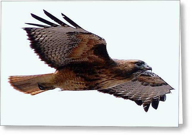 West Fork Digital Greeting Cards - Up Close Fly-by Greeting Card by Don Mann