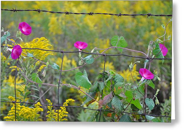 Macrocosm Photographs Greeting Cards - Upon The Fence Greeting Card by Brittany H