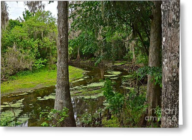 Polk County Florida Greeting Cards - Upper Peace River Greeting Card by Carol  Bradley
