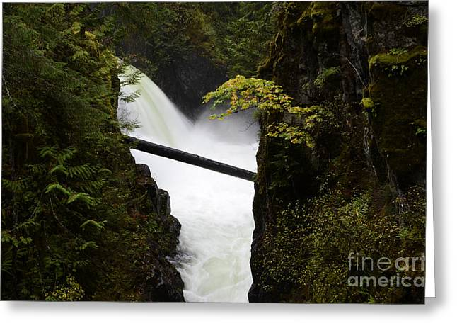 Upper Qualicum Falls Greeting Card by Bob Christopher