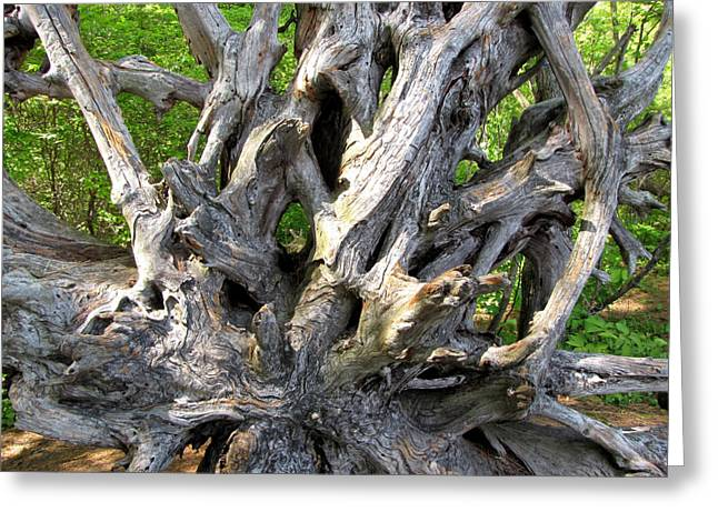 Tree Roots Digital Art Greeting Cards - Uprooted Tree  Greeting Card by Janice Paige Chow
