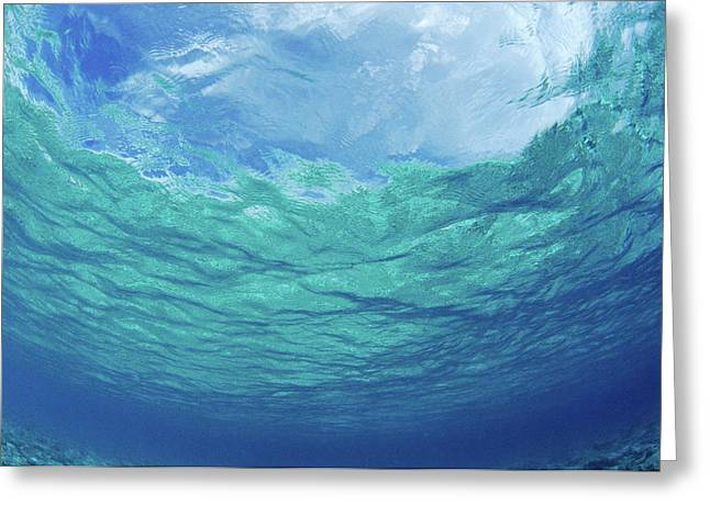 Bluegreen Greeting Cards - Upward to Surface Greeting Card by Don King - Printscapes