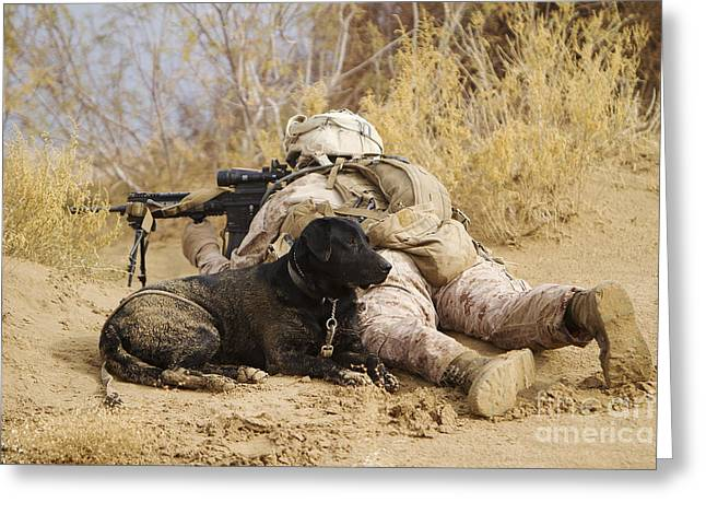 Dog Handler Greeting Cards - U.s. Marine And A Military Working Dog Greeting Card by Stocktrek Images