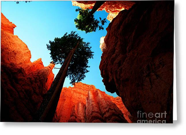 Fir Trees Greeting Cards - Utah - Navajo Loop 4 Greeting Card by Terry Elniski