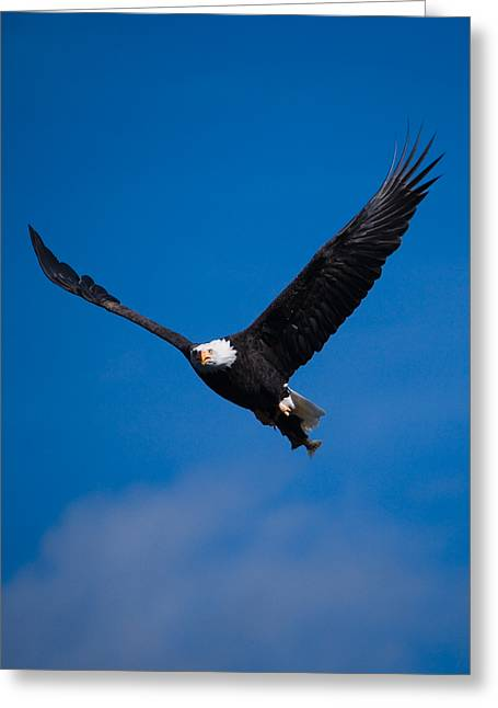 Haliaeetus Leucocephalus Greeting Cards - V for Victory Greeting Card by Randall Ingalls