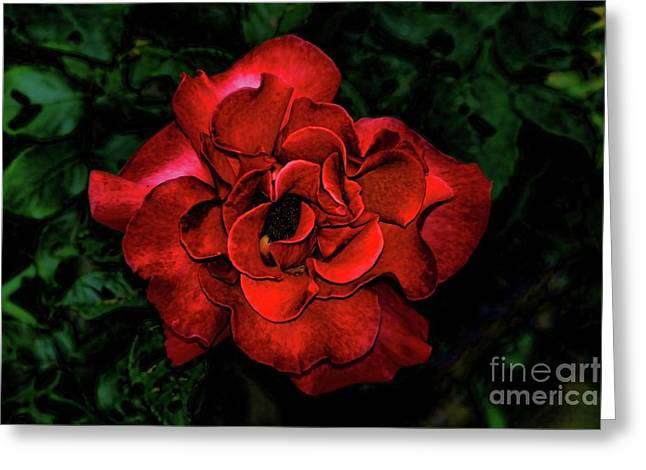 Passion Fruit Greeting Cards - Valentine Rose Greeting Card by Mariola Bitner