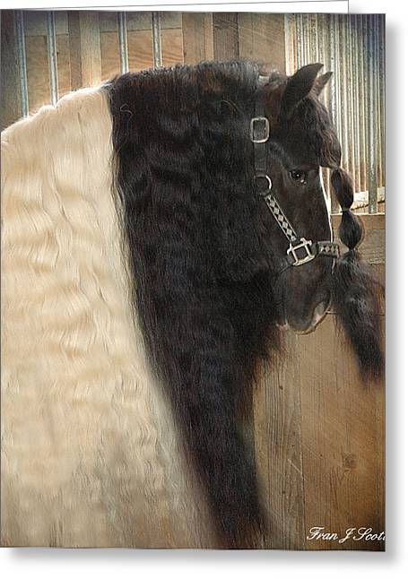 Gypsy Horse Greeting Cards - Valentinos Mane Greeting Card by Fran J Scott
