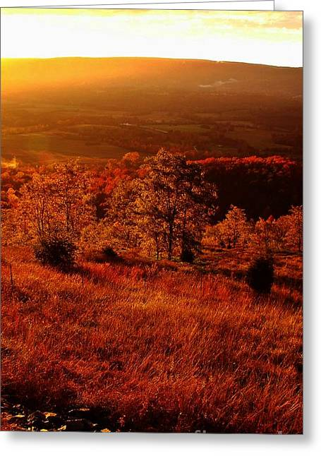 Valley Of Gold Greeting Card by Steven Lebron Langston