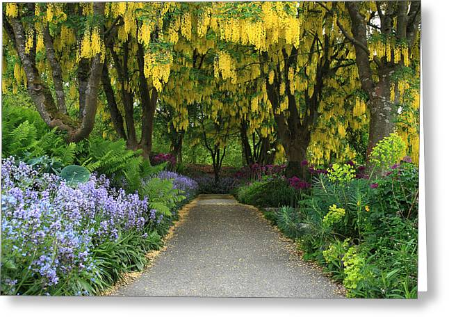 Gold Chain Greeting Cards - Van Dusen Gardens Greeting Card by Pierre Leclerc Photography