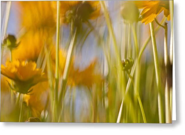 Van Gogh Remembered Greeting Card by Graham Hughes