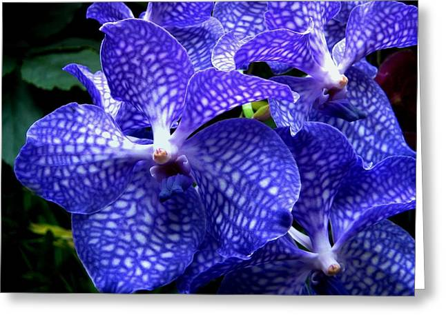 Vanda Orchids Greeting Card by Shirley Sirois
