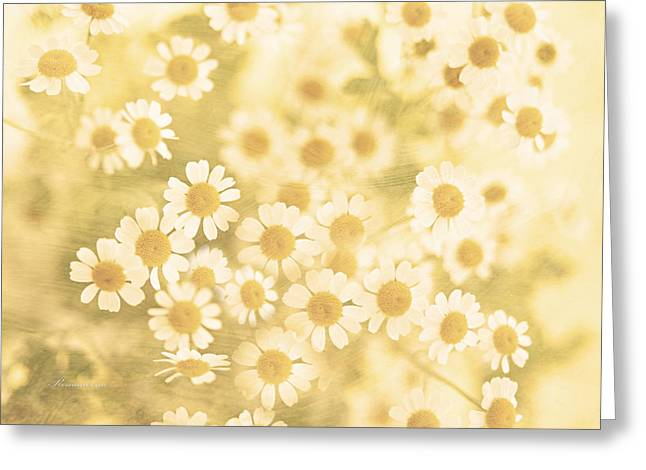 Daisies Mixed Media Greeting Cards - Vanilla Kisses Greeting Card by Georgiana Romanovna