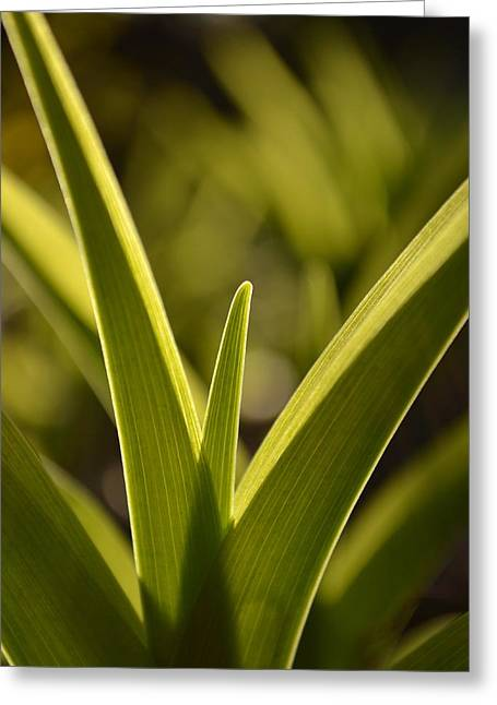 J.d. Grimes Greeting Cards - Variegated Light 1 Greeting Card by JD Grimes