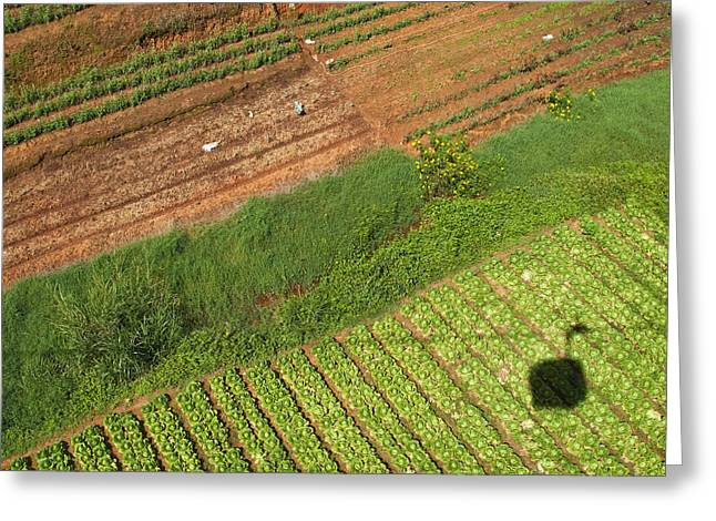 Casting A Shadow Greeting Cards - Vegetable Garden From A Gondola Greeting Card by David Buffington